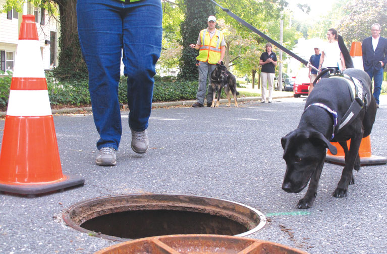 For environmental dogs, sniffing out doody is their duty