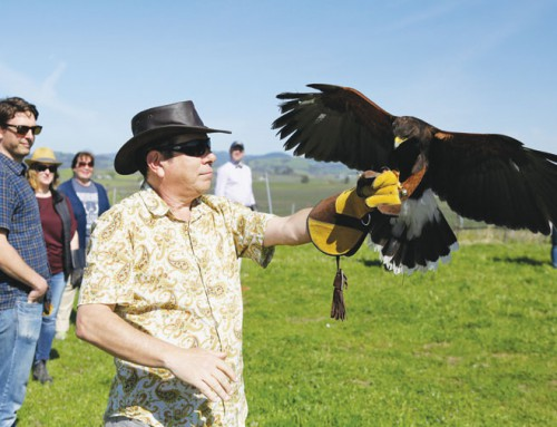 The ancient sport of falconry gaining a foothold with tourists across the country