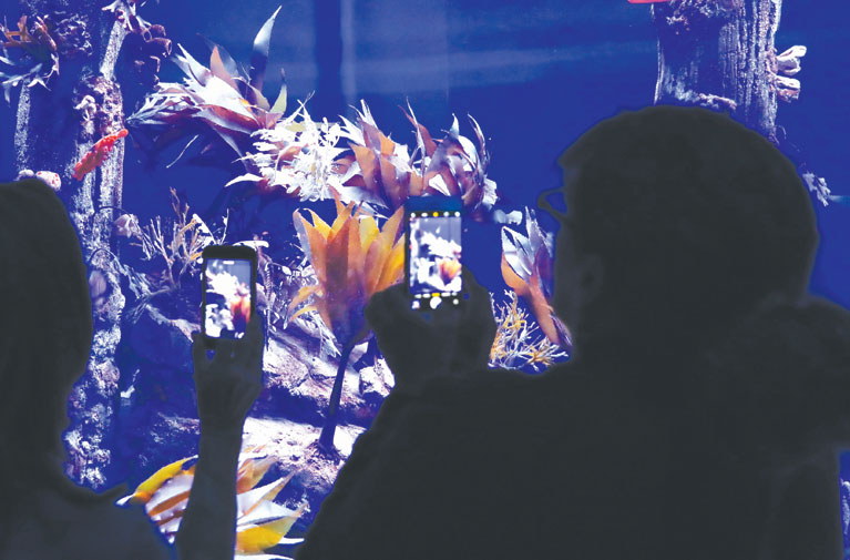 Sea dragon exhibit dazzles visitors at Southern California
