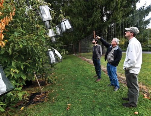 High-tech chestnuts: Ag. Department to consider genetically altered tree