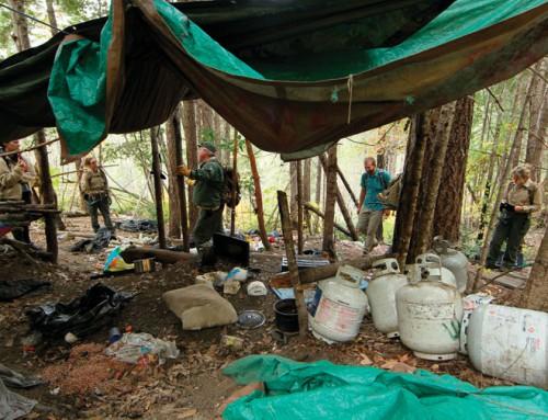 Illegal pot farms on public land create environmental hazard
